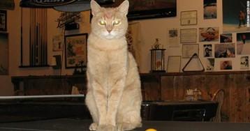 Знаменитый кот-мэр из Аляски умер в возрасте 20 лет