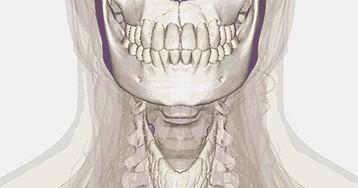 Щитовидная железа: функции и болезни