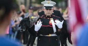 Собаку-сапера проводили в последний путь с почестями, достойными героя войны