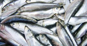 Пару лет назад перевелась почти вся рыба, номестные нерастерялись…