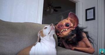 «Мой хозяин — идиот». Пёсик Маймо мужественно терпит странности своего хозяина, но в инстаграме любят их