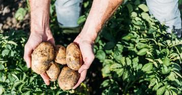 Приехал накопать картошки, авполе уже ковыряется незнакомый мужик…