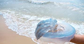 Друга ужалила медуза, носпасатели быстро сообразили, что делать