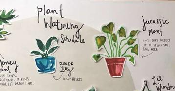 Я так о детях не забочусь! Девушка нарисовала самую подробную и красивую инструкцию по уходу за растениями