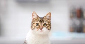 Уменя самый благодарный кот насвете!