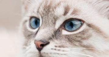 Как яхотела прогнать кота, авитоге «навела порядок» водворе