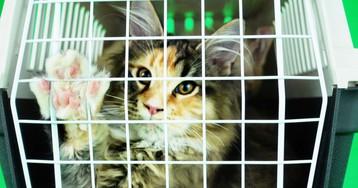 Как одна женщина быстро приучила кота кпереноске