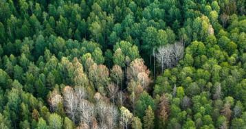 Дети и блокчейн помогут охране российских лесов