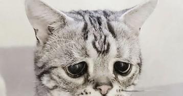 Sucesso no Instagram: conheça Luhu, a gata com a carinha mais triste do mundo