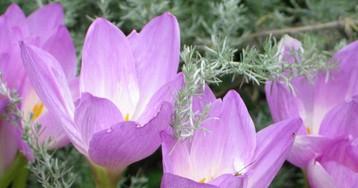 Все цвета осени. Какие растения украсят цветник?