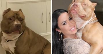 Está na hora de admitir que o cachorro da Gracyanne Barbosa é a maior personalidade de 2017