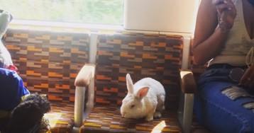 По Лондону зайцем ездит важный белый кролик