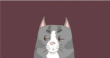 «Хотел бы я быть на месте этого котика»