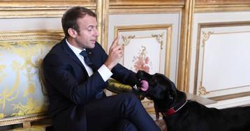 O dia em que o cachorro de Macron fez xixi tranquilão no meio de uma reunião oficial