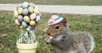 """""""Squirrel Whisper"""" Creates Tiny and Adorable Hats For Squirrels"""