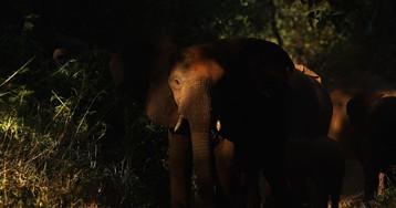 Elephants in the Room Loom Over D.C.: This Week in Washington