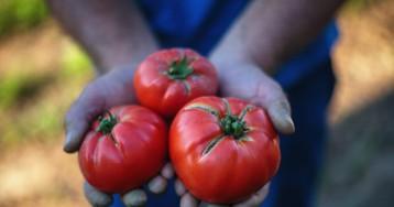 Овощи иягоды