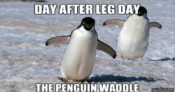 15 Down Right Hilarious Penguin Memes