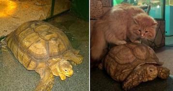 В иркутском зоопарке черепахи предприняли попытку побега, но их предал сторожевой кот