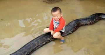 Menino de 3 anos tem píton de estimação de 6 metros e 80 kg