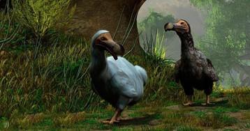 Додо из бэк: 10 исчезнувших видов животных, которых скоро возродят