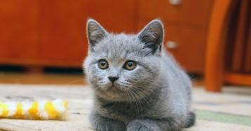 Кот-подросток