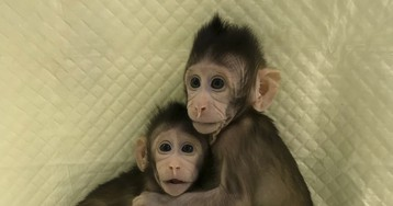 Scientists Have Cloned Monkeys for the First Time. Are Humans Next?