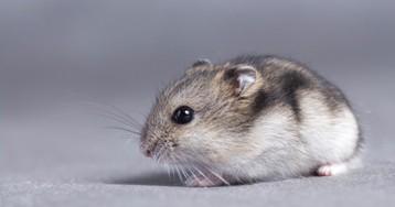 Записка для мышки