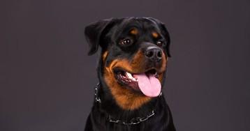 Безответственный хозяин несчастной собаки