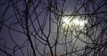 Омские синоптики спрогнозировали ночной дождь в выходные и туманы