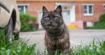 Российских застройщиков обяжут оборудовать подвалы проходами для кошек
