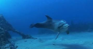 Постпред президента Порошенко в Крыму рассказал, как в Севастополе погибли украинские боевые дельфины
