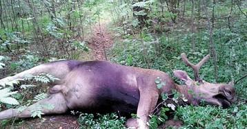 Депутаты разобрались с охотой: новшества в законодательстве ударят по браконьерам