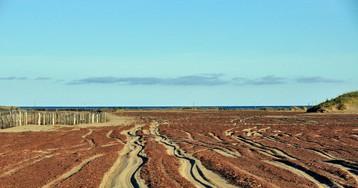 Песчаная пустыня в Арктике продолжает расти!