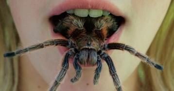 Они уже ползут за тобой: топ-10 жутких австралийских пауков-убийц