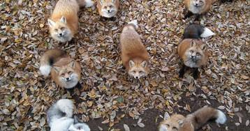 Самое мимимишное место на земле — японская деревня лис