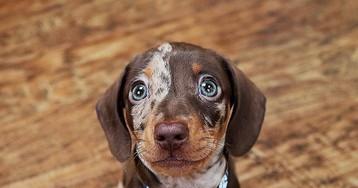 Идём гулять?