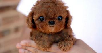 «Закон Люси»: как история одной собаки повлияла на рынок домашних животных Британии