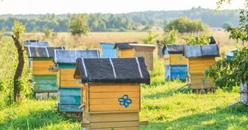 Неправильные пчёлы