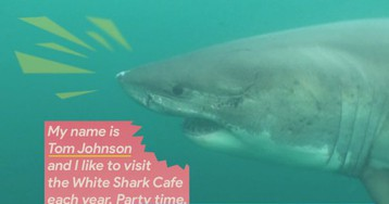 White Shark Cafe: Why sharks travel to this one spot