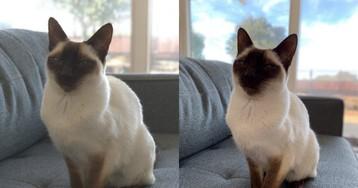 App Halide permitirá usar o Modo Retrato do iPhone XR em objetos e animais [atualizado: saiu!]