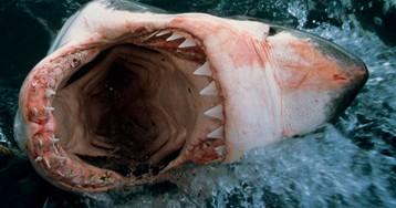 Страшные акулы: как они чувствуют кровь под водой