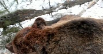 Губернатор Иркутской области Левченко учил внука стрелять животных в клетках