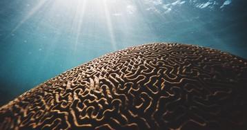 [Из песочницы] Восстановление когнитивных способностей 100 пациентов (перевод статьи Дейла Бредесена)