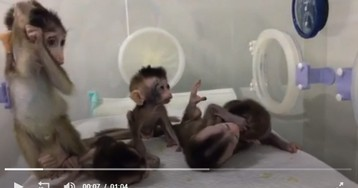 China's latest monkey cloning tests are considered 'monstrous'
