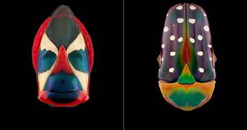 Esta máscara es un insecto