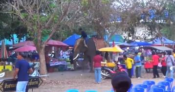 Una joven herida al intentar sacarse una foto colgada de la trompa de un elefante