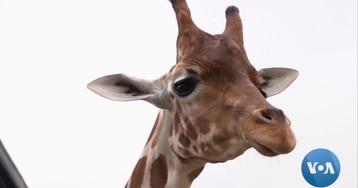 San Antonio Wildlife Ranch Celebrates, Protects Endangered Animals