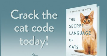 """The Secret Language Of Cats"" Is a Must Read Book For Anyone Who Wants To Understand His Cat Better"