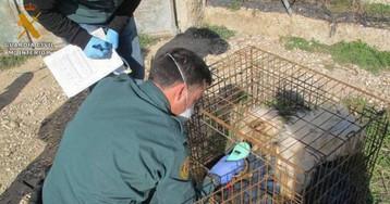 La Guardia Civil investiga a un vecino de Zaragoza tras hallar cinco perros muertos en una finca suya